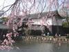 Yasukuni070329_099
